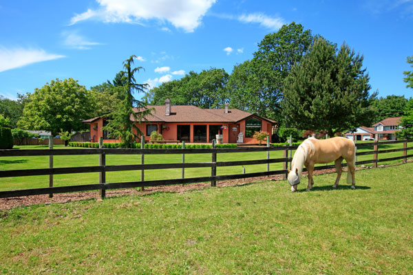 Back Yard Horse
