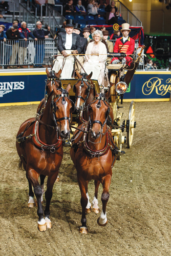 Green Meadows Coaching competition at Royal Agricultural Winter Fair