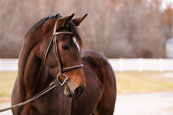 Dude's First Lady - Adoptable Horse