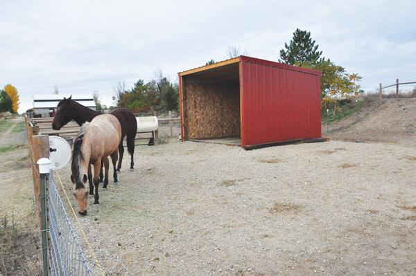 Sacrifice Area - Shed - Shelter, eco-freindly horsekeeping