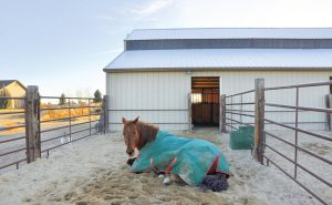 Horse in a dry lot / run-in area