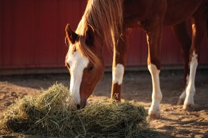Hay Pile for Pastured Horse