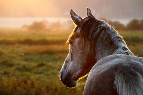 Thankfulness for Horses