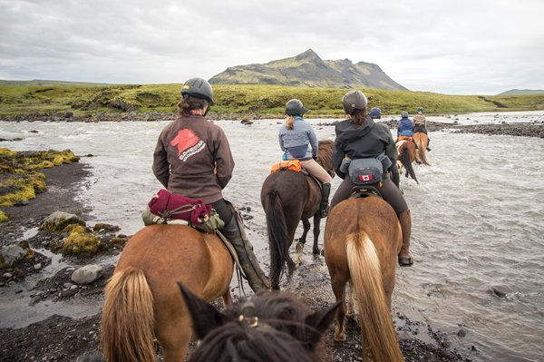iceland mountain stream and horses