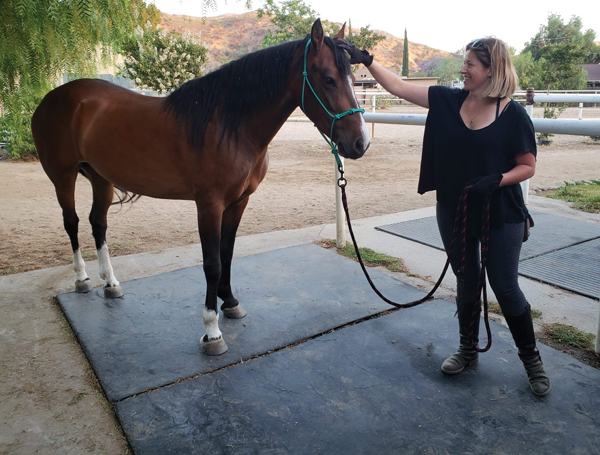 Horse and Owner Bonding