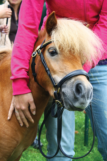 Miniature Horses on planes