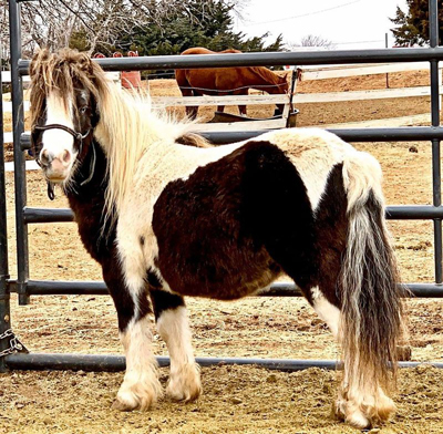 Ralphie - The Right Horse Adoptable Horse of the Week