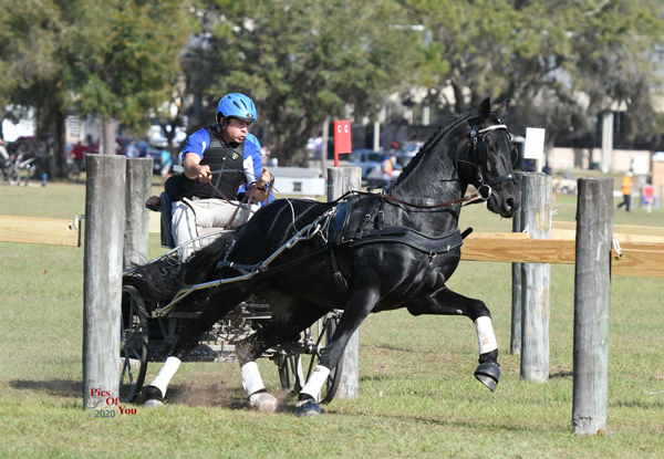 Raymond Helmuth and Kendro at the USEF Preliminary Combined Driving National Championships