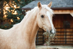 Run-in Shed for Pastured Horses