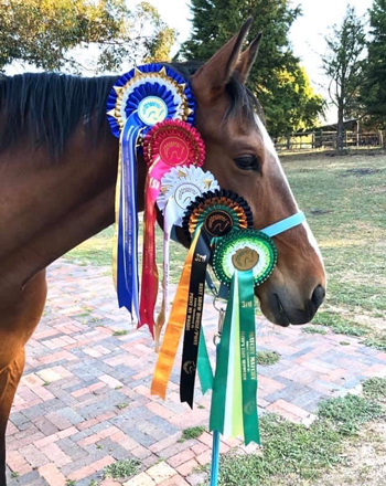 Horse with Horse Show Ribbons