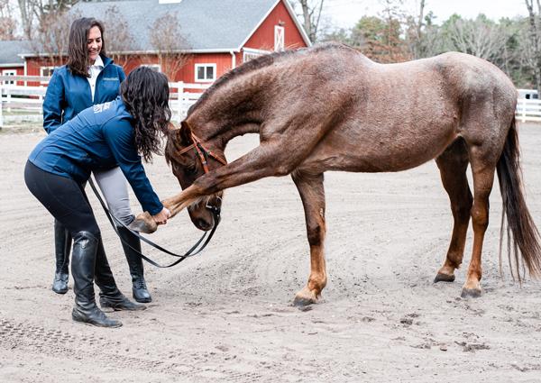 Massage Therapist Heather Wallace works on Ari