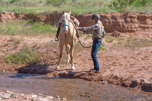 Getting a Horse to Cross Water