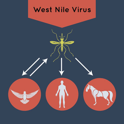 Warding Off West Nile: Protecting Your Horse from West Nile Virus