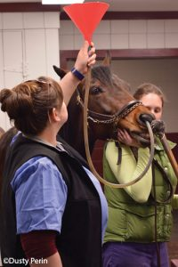 Using a nasogastric tube on a horse for fluids or medication